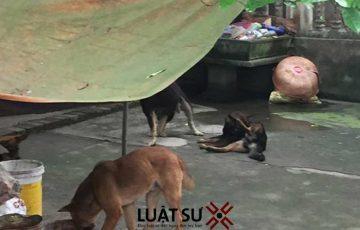 Thả rông đàn chó cắn chết người, chủ nuôi có thể bị phạt đến mấy năm tù?